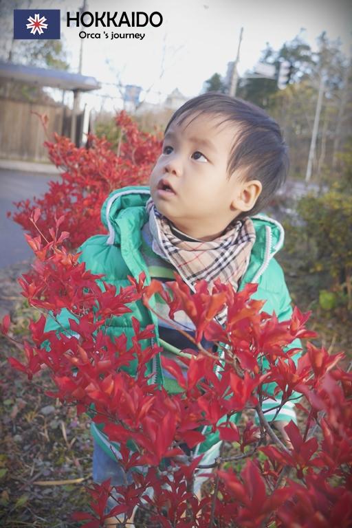 ใบไม้แดงเล็กๆข้างทาง