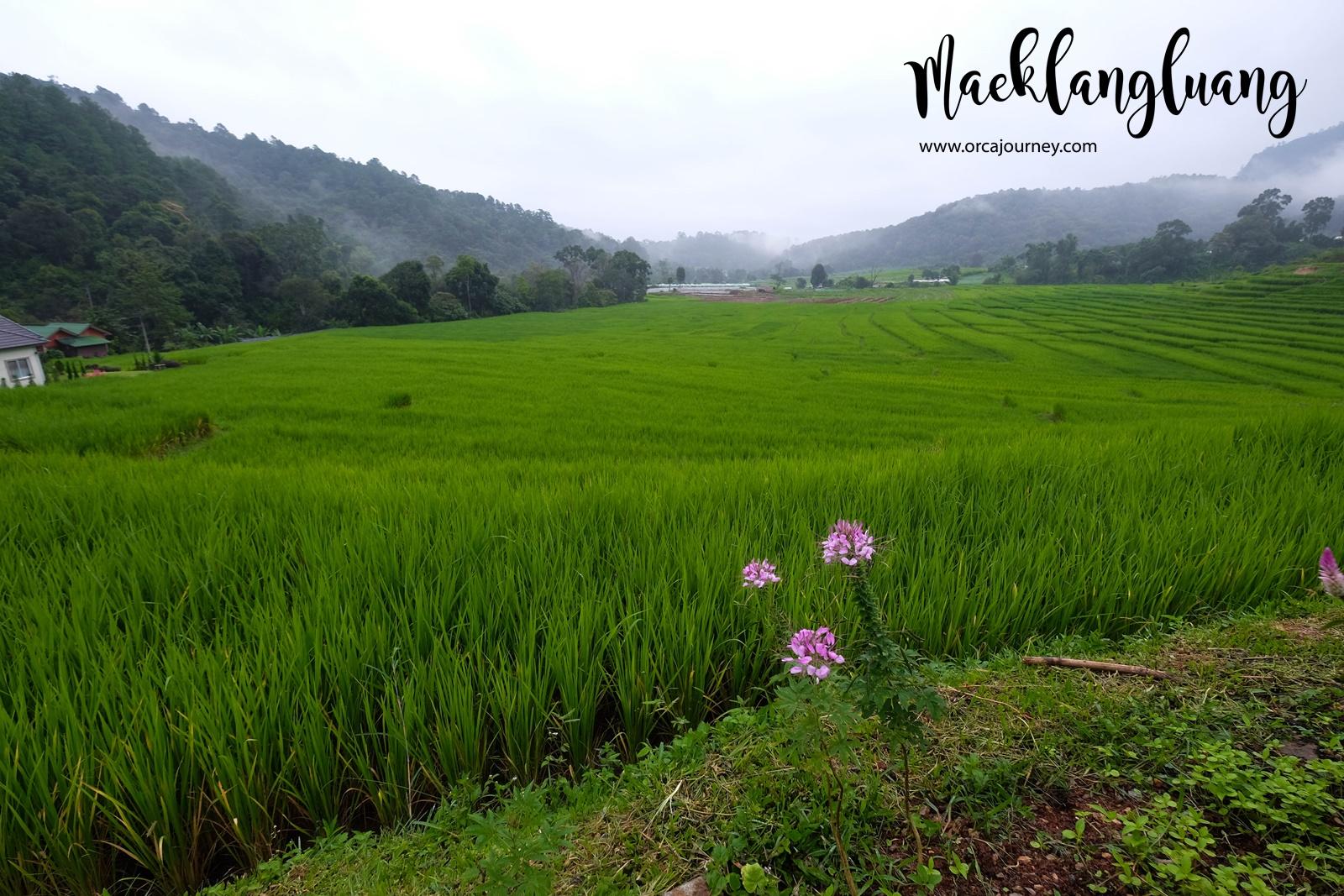 maeklang_064